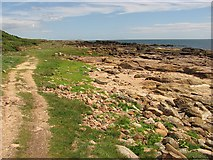 NO6006 : Fife Coast Path by Richard Webb