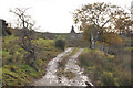 NS2589 : Track to the ruined farm at Little Balernock by Steven Brown