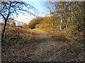 SD7606 : Bridleway, Ladyshore by David Dixon