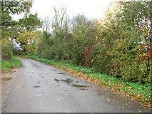 TM2490 : Autumnal hedge beside Boom Lane, Shelton Common by Evelyn Simak
