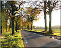 TM3190 : Norwich Road past America Wood by Evelyn Simak