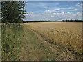 TL6955 : Wheat field off Bradley Road by Hugh Venables