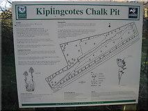 SE9143 : Kiplingcoates  Chalk  Pit by Martin Dawes