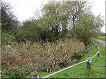 TM3787 : Pond near the Old School House at Ilketshall St Andrew's by Adrian S Pye