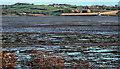 J5070 : Intertidal mudflats, Strangford Lough (1) by Albert Bridge