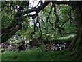 SN1133 : Ruins at Hafod Tydfil (1) by ceridwen