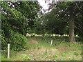 TF0304 : Burghley Park by Richard Webb