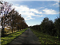 TF6907 : Avenue of trees from Mill Farm, Fincham by Adrian S Pye