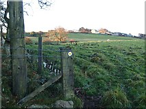NZ0757 : Footpath to Whittonstall from Ryehill Wood by Clive Nicholson