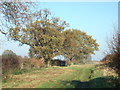 TF8630 : Trees and track near Sculthorpe Airfield, Norfolk by Richard Humphrey