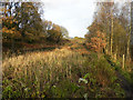 SD7506 : Manchester, Bolton & Bury Canal, Nob End Locks by David Dixon