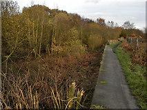 SD7506 : Manchester, Bury & Bolton Canal; Nob End by David Dixon