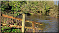 J3369 : The Lagan in flood at Moreland's Meadow (2) by Albert Bridge