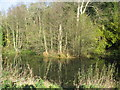 ST5959 : The pond below Stowey Castle Wood by Dr Duncan Pepper