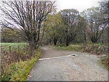 SD7013 : Bridleway Between Gleaves Reservoir and Longworth Lane by David Dixon