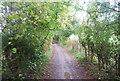 TQ5959 : Pilgrims' Way (North Downs Way) by N Chadwick