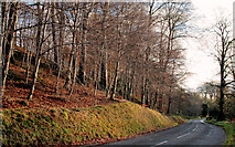 J3268 : Autumn, Minnowburn, Belfast 2010-5 by Albert Bridge