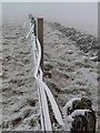 NS9534 : Fence and wall leading to Tinto summit. by Gordon Brown
