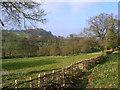 SK8230 : Alders in the Devon Valley, above Knipton by Stefan Czapski