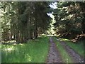 NO3492 : Road, Alltcailleach Forest by Richard Webb