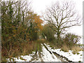 TM2686 : Stoney Lane, Alburgh by Adrian S Pye