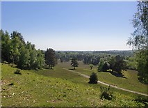 SU2609 : View south-west from the north end of Acres Down, New Forest by Stefan Czapski