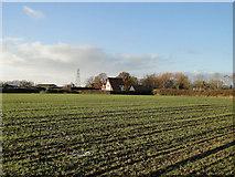 TM3886 : Cottage near Willow tree Farm, Ilketshall St Andrew by Adrian S Pye