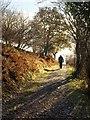 SX7290 : Two Moors Way below Castle Drogo by Derek Harper