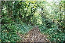 TQ5359 : Woodland path near Otford Station by N Chadwick