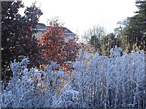 SJ8959 : Autumn and Winter by Jonathan Kington