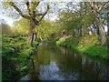 TQ2172 : Beverley Brook, south of Killcat Corner, in April by Stefan Czapski
