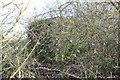 SP3801 : In the bush by Bill Nicholls