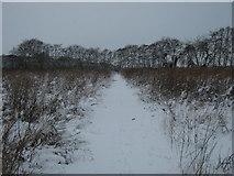 TR2954 : Footpath to Tickenhurst Shave (2) by David Anstiss