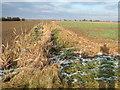 TF5216 : Farmland east of Walpole St Peter, Norfolk by Richard Humphrey