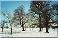 SP9533 : Snow covered parkland, Woburn by nick macneill
