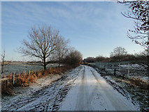TM4874 : Road across Walberswick Nature Reserve by Adrian S Pye