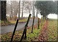 J3268 : Road and trees, Minnowburn, Belfast by Albert Bridge