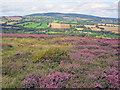 SO6278 : Silvington Common by Trevor Rickard