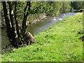 NY1525 : River Cocker by David Purchase
