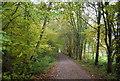 TQ4635 : Forest Way, Sawpit Wood by N Chadwick