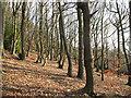 SE0922 : Bankhouse Wood by Stephen Craven