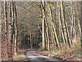 SU6884 : Road in woodland, Stoke Row by Andrew Smith