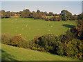 SO3122 : Sheep pasture near Lower Pentwyn by Trevor Rickard