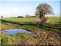 TG3606 : Puddle in field by Wood Lane Farm, South Burlingham by Evelyn Simak