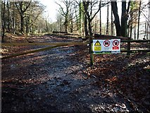 SX8979 : Forestry track in Haldon Forest close to the A380 by David Gearing