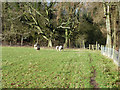 TQ3854 : Footpath to Woldingham by Robin Webster