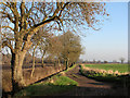 TL5255 : Fulbourn: Harcamlow Way in January by John Sutton