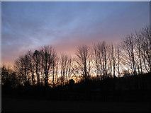 SE7381 : Winter treeline by Pauline E