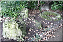 TQ2882 : Fossil Forest in Queen Mary's Gardens by Stephanie Shillito