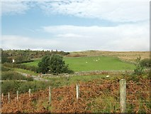 NX6060 : A moorland fence by Ann Cook